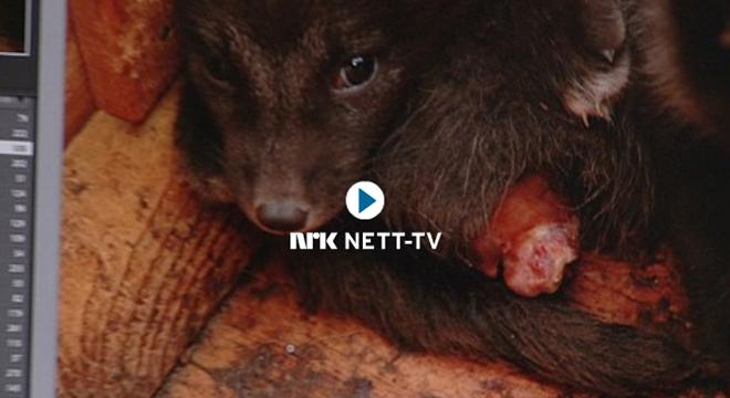 NRK_minkar