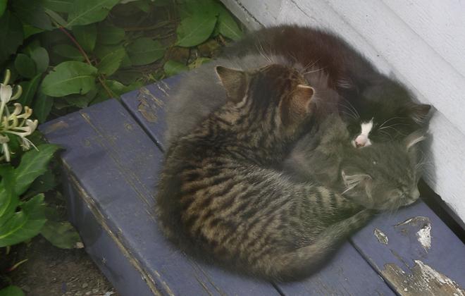 Hyresgaster tvingas koppla katten