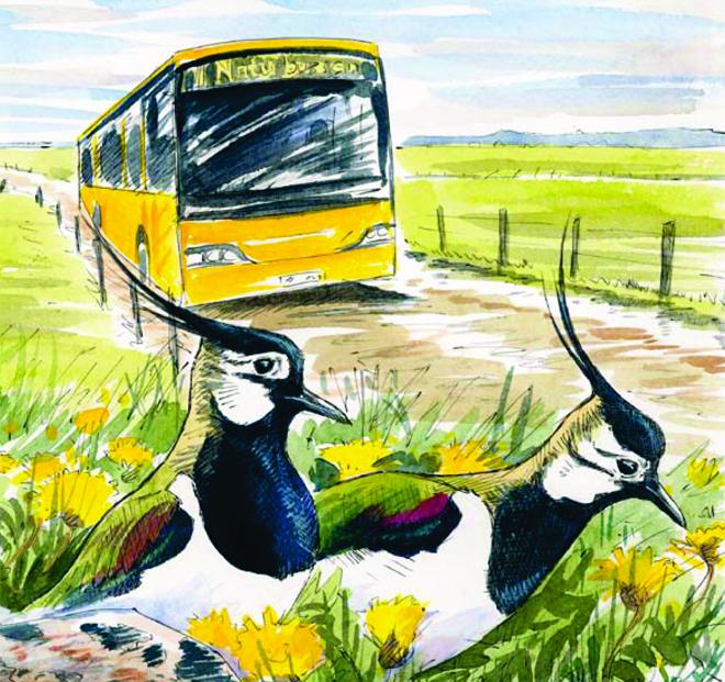 naturbussen_stor