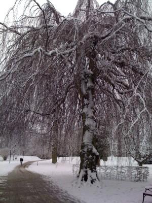 vinter_lund_2009